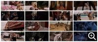 Крошка из Беверли-Хиллз (2008)